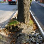 Rozsáhlé poškození kořenového systému při rekonstrukci vozovky z jedné strany a cyklostezky ze strany druhé. Poškození staticky významného kořenového koláče se považuje za havarijní stav a je nutné odstranění stromu, protože hrozí jeho vývrat. Zničení jírovce (Aesculus hippocastanum) se dalo snadno předejít již ve fázi projektu a citlivěji provedenými stavebními pracemi.